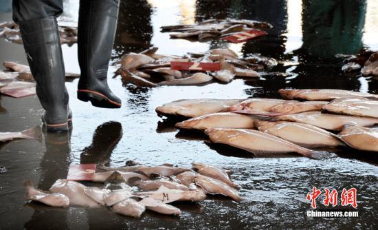 黑幫生意越來越難做 日本山口組成員非法捕魚謀生