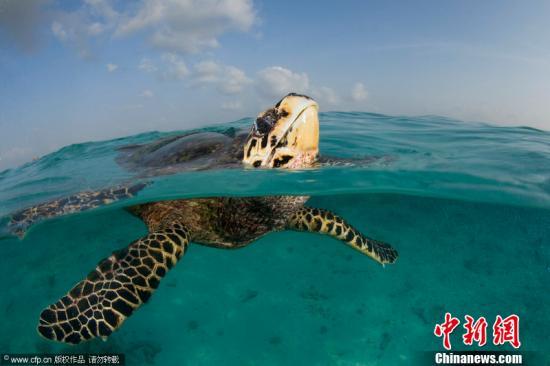 资料图:海龟。图片来源:CFP视觉中国