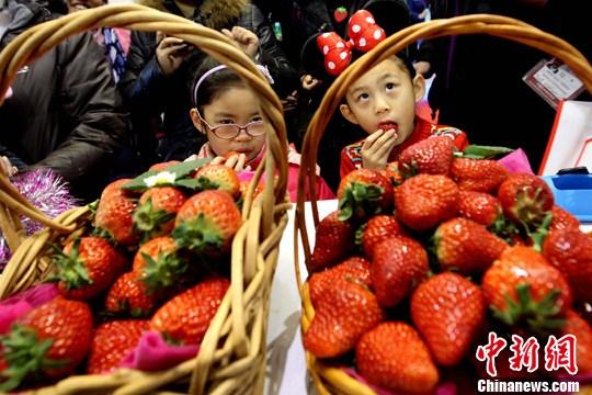 资料图:草莓。<a target='_blank' href='http://www.chinanews.com/'>中新社</a>记者 富田 摄