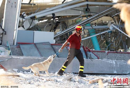 意大利北部29日发生里氏5.8级地震,震源深度10公里,目前死亡人数已升至16人,另有350人受伤。图为救援人员带着搜救犬在灾区进行救援工作。