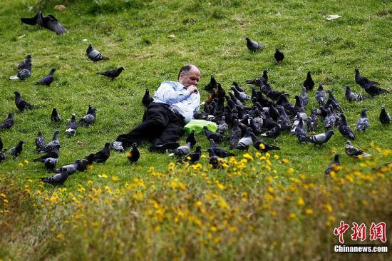 当地时间8月4日,在伦敦圣詹姆斯公园内,一名游客在给鸽子喂食。记者 富田 摄