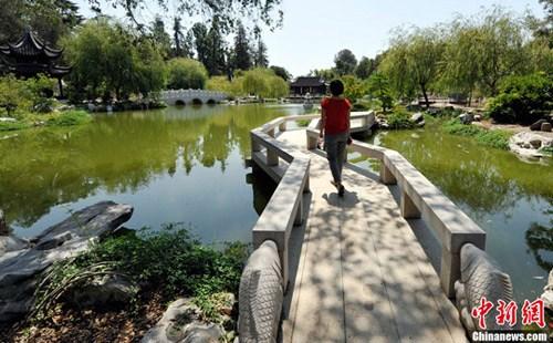 著名的洛杉矶汉庭顿图书馆内的流芳园,号称是亚洲以外最大的中国古典园林。中新社发 毛建军 摄