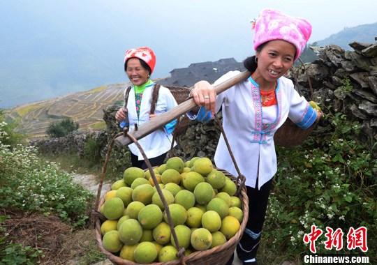 罗汉果之乡——广西桂林