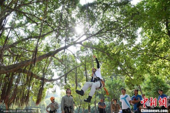 """資料圖:""""攀樹運動""""課程在廈門大學開課,圖為廈門大學老師進行爬樹演示。張向陽 攝 圖片來源:CFP視覺中國"""