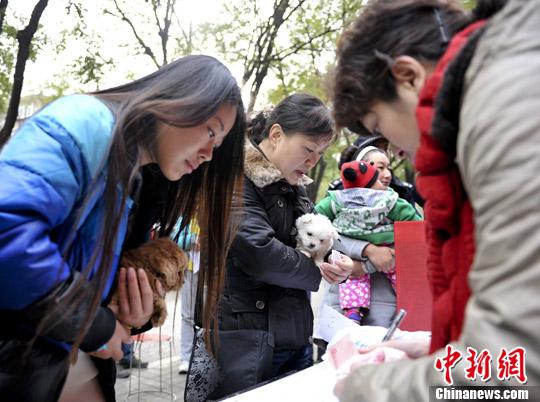 资料图:市民领养收容犬。中新社发 张勇 摄