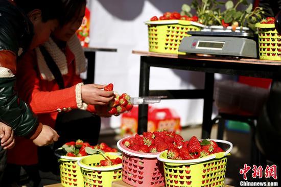 资料图:草莓。/p中新社发 富田 摄
