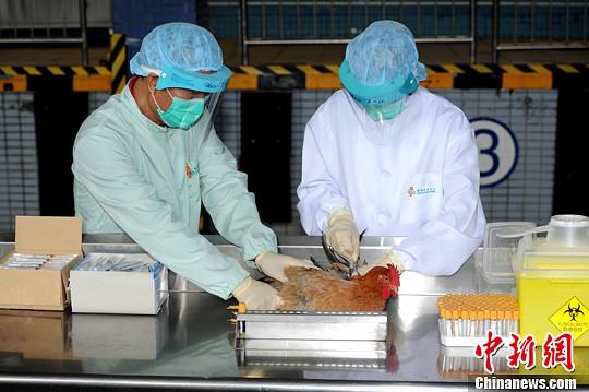 农业部:强化家禽H7N9流感免疫等综合防治措施