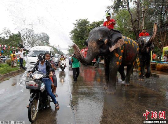 英国钢琴家走进泰国丛林 为受虐待大象演奏乐曲