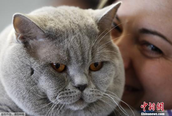 4月21日,德國多特蒙德舉行世界貓展,約400個品種的貓咪參加了此次為期兩天的展覽。