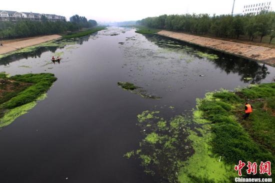 资料图:一处黑臭水体。洪波 摄 图片来源:CFP视觉中国