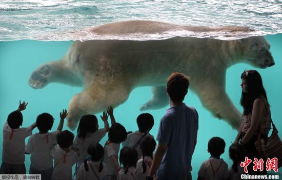 """资料图:2013年5月29日,新加坡动物园内,""""""""伊努卡""""在水池里畅游。"""