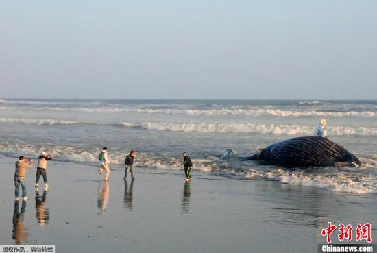 资料图片:秘鲁海滩。