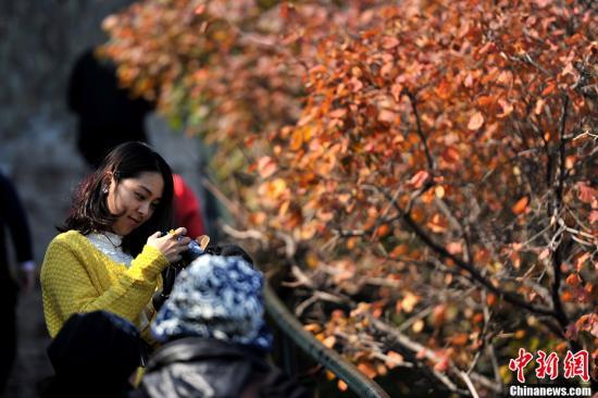 北京香山迎来赏秋高峰。记者 金硕 摄