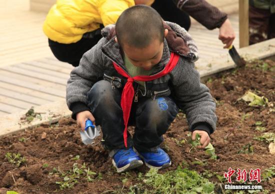 """12月19日,安井学校学生在楼顶的""""开心农场""""玩耍。据悉,为了让学生体验种植的快乐,贵州省贵阳市安井学校在教学楼顶开辟了一块占地近400平米的""""开心农场"""",让孩子们在此种植白菜、茄子、豌豆、油菜等农作物。中新社发 鲍光翔 摄"""