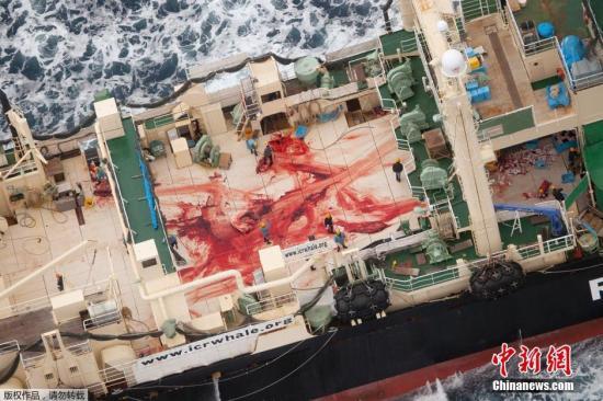 资料图:反捕鲸团体公开的日本捕鲸船只。