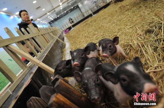 农业农村部拟修订饲养场等五类场所动物防疫条件