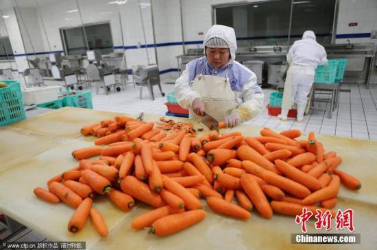2014年1月21日,北京,生菜车间,一名工人将洗好的胡萝卜切去多余部分。秦斌 摄 图片来源:CFP视觉中国
