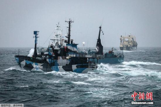 """当地时间2月2日,南大洋,日本捕鲸船""""第二勇新丸""""(Yushin Maru)号企图对反捕鲸船""""史蒂夫・欧文""""(Steve Irwin)号进行驱离。"""