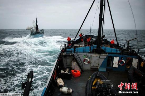 """资料图:2014年2月2日,南大洋,日本捕鲸船""""第二勇新丸""""(Yushin Maru)号企图对反捕鲸船""""史蒂夫・欧文""""(Steve Irwin)号进行驱离。"""