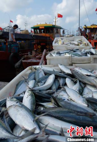 资料图:市民在码头选购新鲜海货。/p中新社发 杜洋 摄