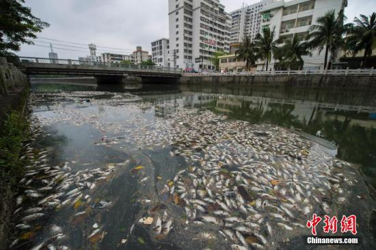 4月4日,位于海南省海口市振兴南路美舍河一号桥处出现大面积死鱼,形成条带状,在河面延伸超一公里长,并散发腥臭味。附近居民怀疑是河水污染所致。海口市环保部门派人到现场勘查,经初步判断为缺氧所致,称具体原因还需进一步调查。中新社发 骆云飞 摄