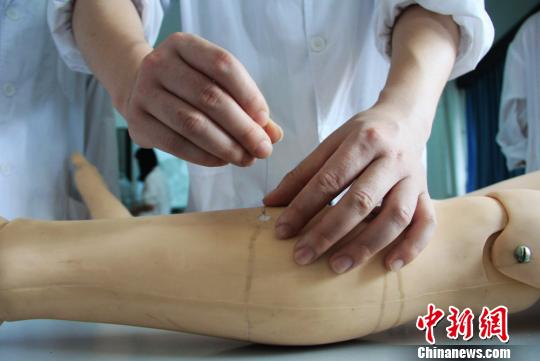 """资料图 湖南中医药大学学子""""最后一课""""纪念校园,毕业生再次动手在人体模型上做针灸实验。唐小晴 摄"""