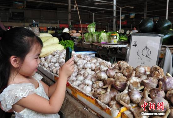 材料图:年夜蒜。a target='_blank' href='http://www.chinanews.com/'中新社/a收 翟羽佳 摄