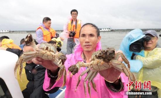 资料图:阳澄湖大闸蟹。
