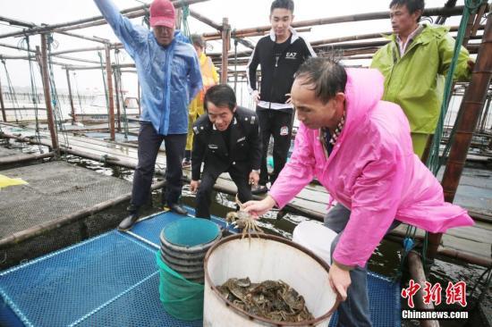 资料图:阳澄湖大闸蟹开捕。李骥 摄