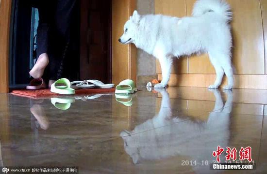 资料图:浙江杭州一主人在家中放置可移动的监控摄像头,记录家中萌宠画面。图片来源:CFP视觉中国