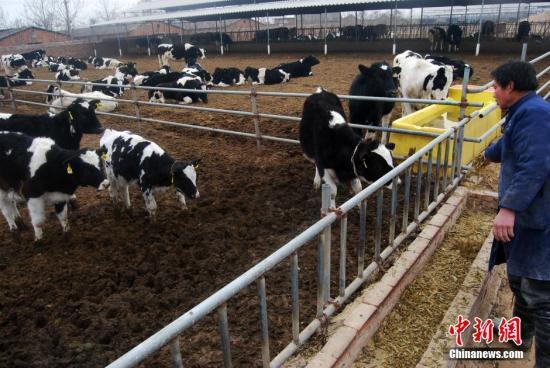 农业部:推动由喝奶向吃奶转变 增加干乳制品生产