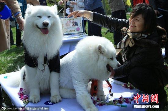 资料图:宠物犬。图片来源:CFP视觉中国