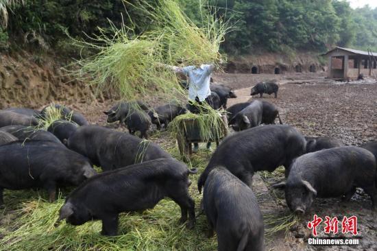 农业农村部:4月生猪、能繁母猪存栏环比