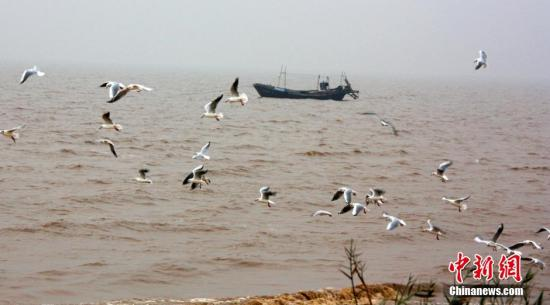 资料图:渤海湾畔。王占军 摄