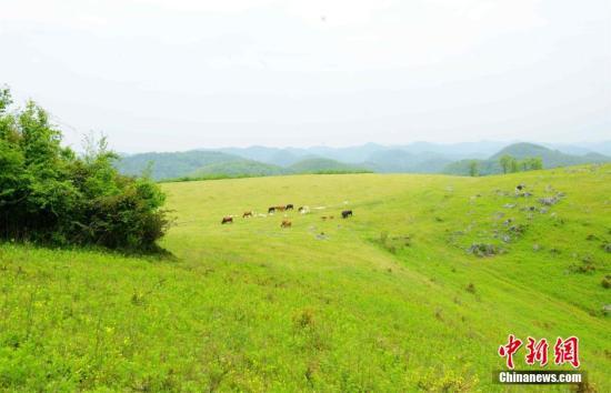 中国退耕还林还草20年来成林面积占全球增绿面积4%