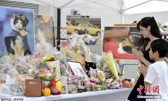"""资料图:日本和歌山电铁的花猫站长""""小玉""""(Tama)病逝,享年16岁。和歌山电铁公司为小玉举行葬礼,有来自海内外约3000人出席。"""