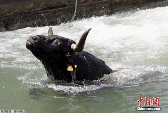 资料图:公牛。