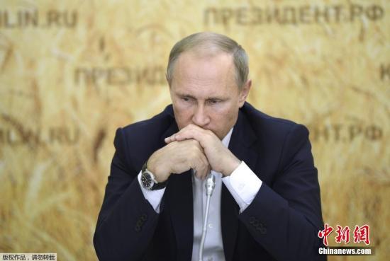 当地时间2015年9月24日,俄罗斯Rostov,俄罗斯总统普京造访当地,与农民互动。