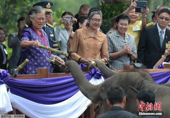 材料图@员天工夫2015年10月15日,泰国华富里府,泰国诗琳通公主饲喂年夜象。泰国诗琳通公主庆贺60岁诞辰,放死了6头年夜象,461只其他的植物。