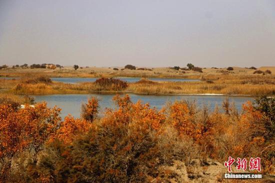 资料图:新疆塔克拉玛干沙漠现湖泊,水沙相连风光无限。耿丹丹 摄