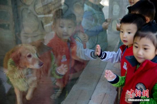 资料图:北京一幼儿园的儿童在教师的带领下来到学校里的动物园,认识动物。<a target='_blank' href='http://www.chinanews.com/'>中新社</a>记者 刘关关 摄