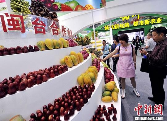 """本届""""农交会""""闽台水果展示区展示琳琅满目的水果吸睛。 刘可耕 摄"""