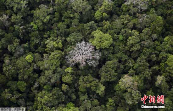 资料图:亚马孙雨林。