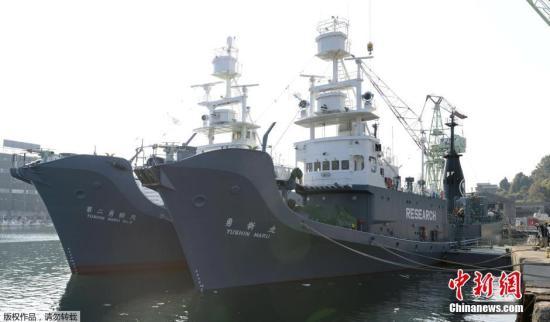 当地时间12月1日,日本下关港市,日本科研捕鲸船队从山口县下关港出发前往南极海域。