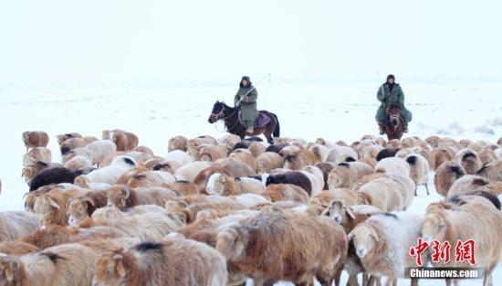 12月10日,新疆阿勒泰地区哈萨克族牧民在转场途中。近日,阿勒泰地区牧民开始了今年最后一次牲畜大转场,百万头牲畜冒着风雪陆续转入冬牧场。巴合提别克 摄