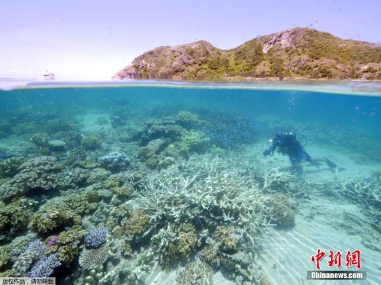 保险投资:澳匹俦发现巨型浮岩 或助拯救大堡礁白化珊瑚(图)