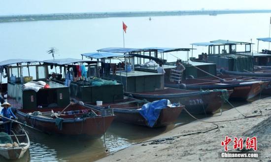 资料图:停靠在港口进入休渔期的渔船。 卓忠伟 摄