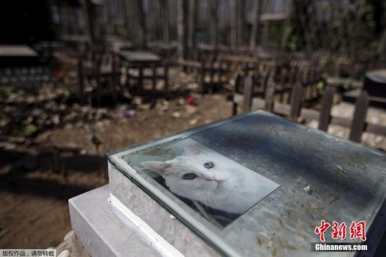 资料图:宠物墓地一只猫咪的墓碑。