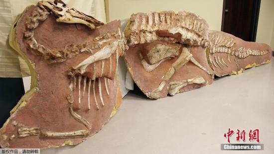 材料图:恐龙化石。