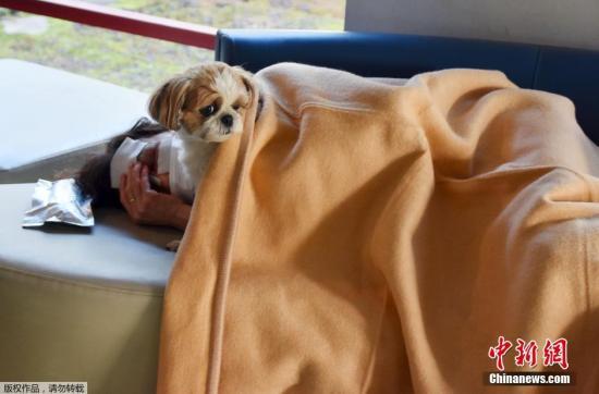 小狗陪同在地动中受伤的客人。据熊本县有关方面走漏,停止今晨5点,县内受伤职员最少达765人,此中有53人轻伤。县内约500处一度国有约4.44万人返逃出亡。